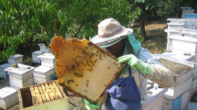 Photo of Николовски: Неопходни се системски мерки за поддршка на пчеларството