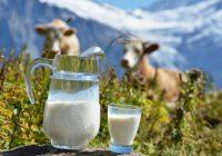 Почна пријавувањето субвенции за млеко
