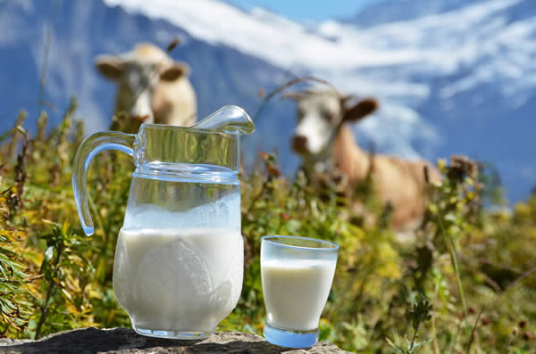 Photo of Почна пријавувањето субвенции за млеко