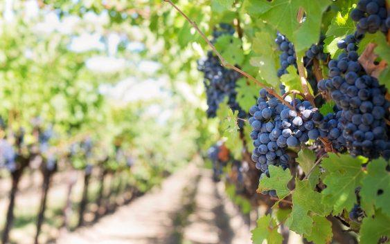 Заев од Неготино вети уште по 2 денари субвенција за грозјето