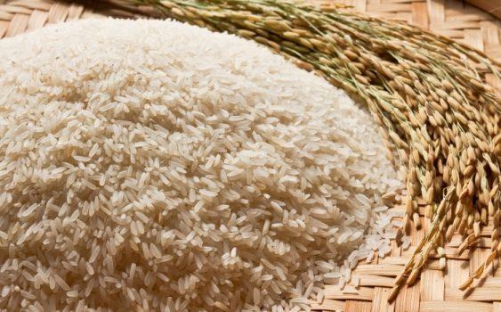 """Зголемени приноси на ориз од употребата на """"Тераграмин"""" во Кочани"""