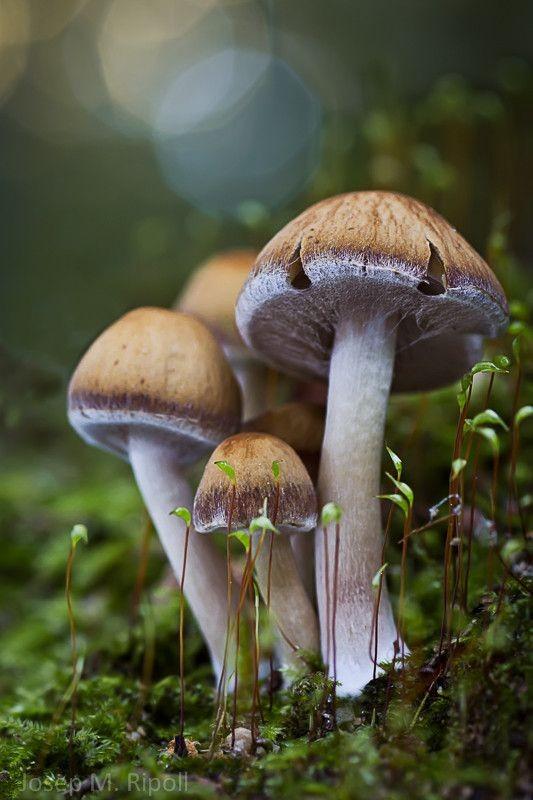 Photo of Радиоактивните печурки откриени во Франција биле увезени од Белорусија