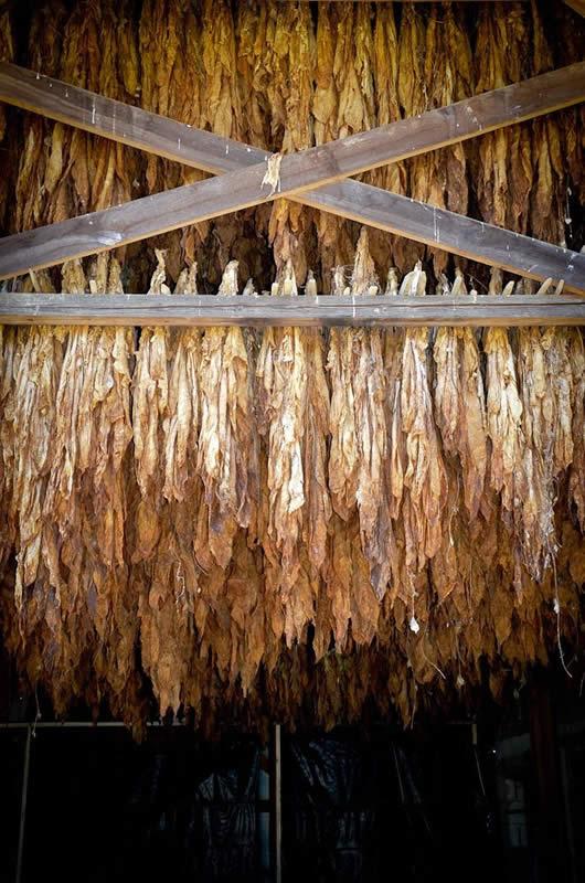Photo of Откупот на тутун во најдобар ред