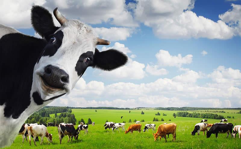 Photo of Неконтролираната употреба на антибиотици кај добитокот штетна за луѓето