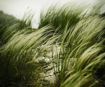 Силен ветер во Пелагонија
