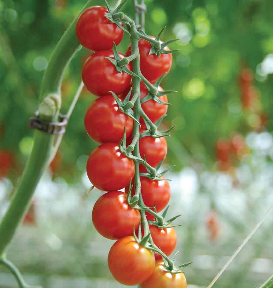 Photo of Мали црвени и лековити плодови