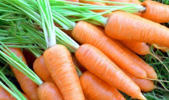 Чување на морковот во зимски услови