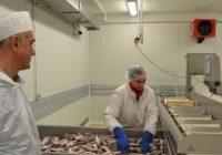 Македонски производи од риба на грчкиот пазар