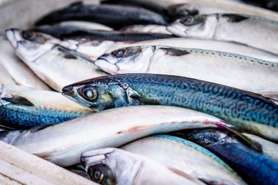 Photo of Македонски рибни производи на европскиот пазар