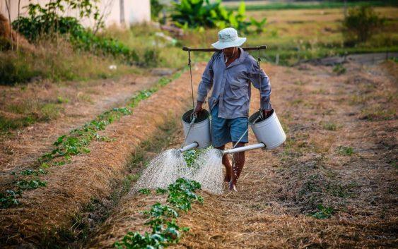 Доделени субвенции за млад земјоделец