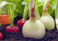 Недоволен интерес за органско производство кај тиквешките земјоделци