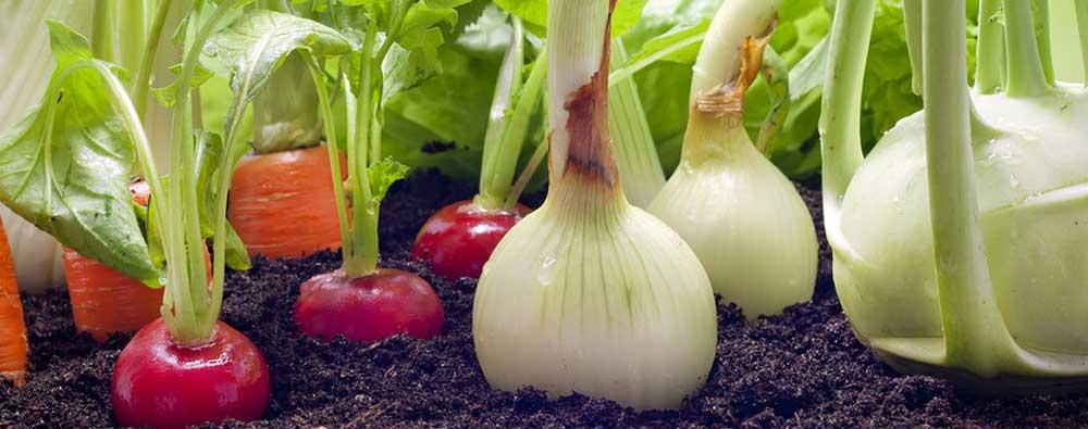Photo of Недоволен интерес за органско производство кај тиквешките земјоделци