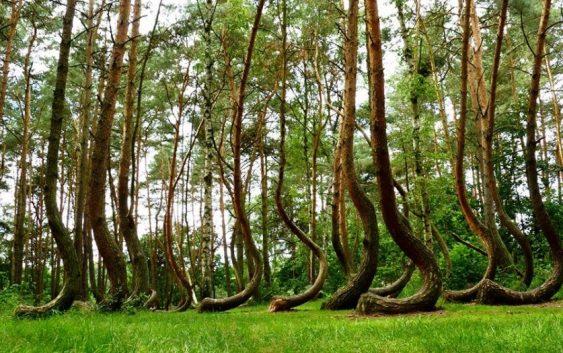Исплатени субвенции за обнова на приватни шуми