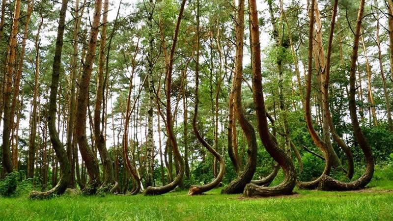 Photo of Исплатени субвенции за обнова на приватни шуми