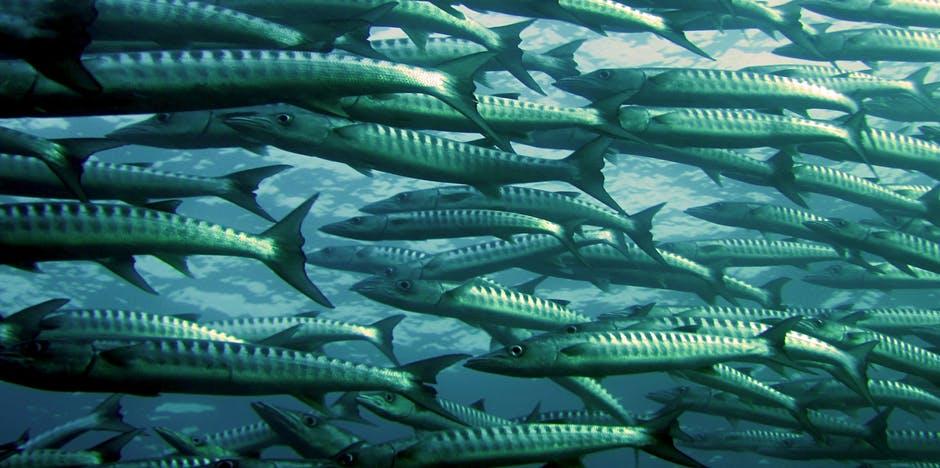 Photo of Пријавување субвенции за рибарство