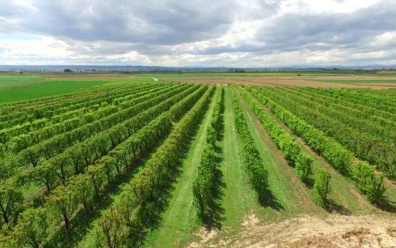Реонизација на земјоделското производство