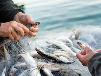 Photo of ЈАВЕН ПОВИК за доставување барање за користење средства за реализација на мерки Програмата за финансиска поддршка во рибарството