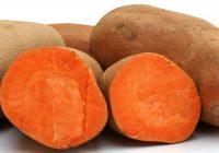 Одгледување на сладок компир (батат)