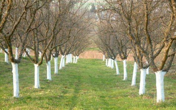Варосувањето штити од премрзнување, од болести и од штетници