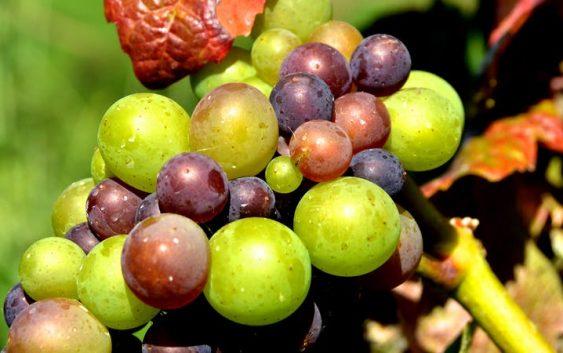 Зошто ензимите се важни за квалитетот на виното