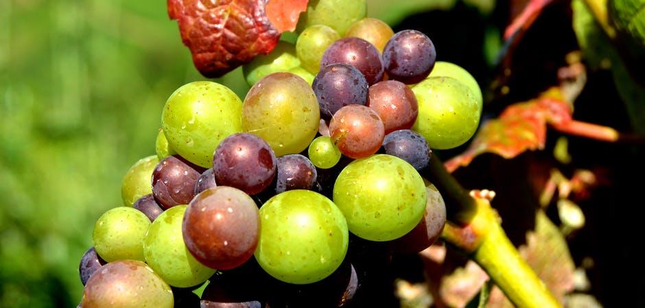 Photo of Зошто ензимите се важни за квалитетот на виното