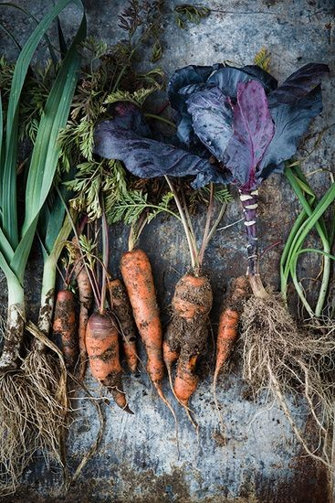 Photo of Уште 5 дена пријавување за субвенции за органско производство