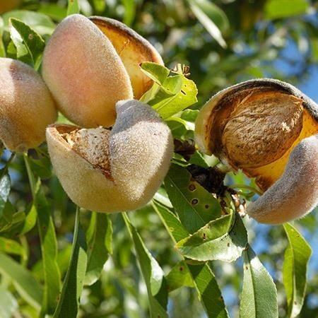 Photo of Голема заработка од ореви и лешници