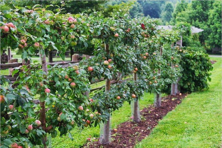 Photo of Добри услови за подигнување на нови овошни насади