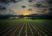 Економските сметки во земјоделството