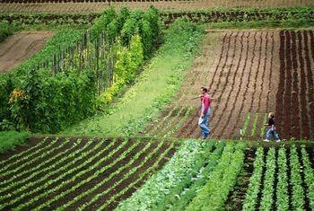 Photo of Промени во даночниот систем на земјоделците