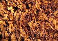 Откупен половина од тутунот од овогодинашната реколта