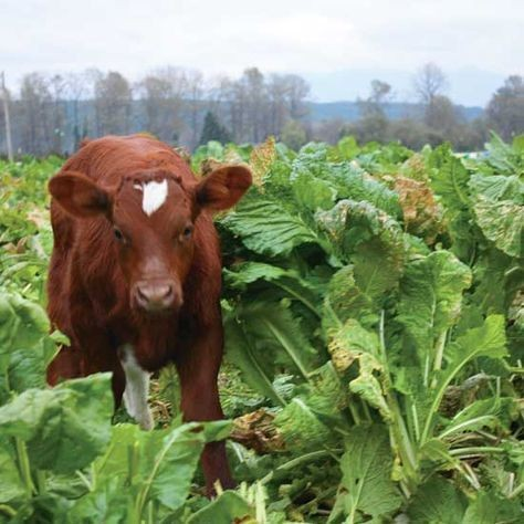 Photo of Мерки за заштита на добиточната храна од микотоксини