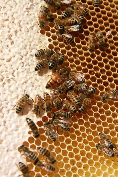 Photo of Календар за пчеларство за месец јануари