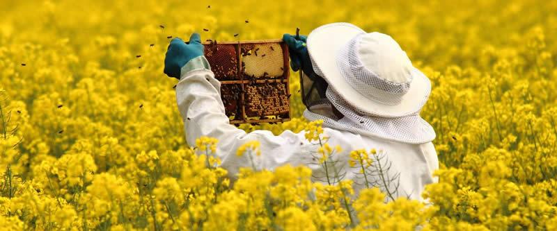 Photo of Грешки на пчеларот