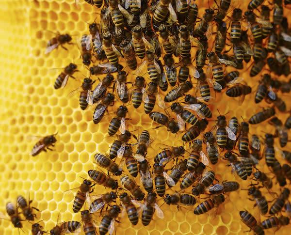 Photo of Клукајдрвецот-зимски непријател на пчелите