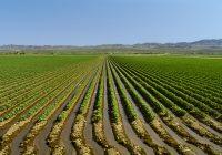 Временските услови поволни за житата и за овошките