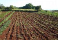 Индексот на цените во земјоделството кај инпутот е зголемен за 2.6%, а кај аутпутот се бележи зголемување од 2.4%