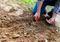 Здравјето на почвата во зима