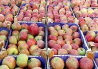 Русија го забрани увозот на јаболка од БиХ