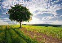 Временските услови идеални за аграрот – земјоделците во неизвесност каде ќе ги пласираат производите и по кои цени