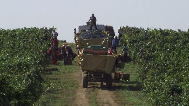 Photo of Платена првата рата за винското грозје