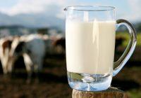 Млекопроизводството пред колапс- под на количините на сурово млеко, квалитетот доведен во прашање
