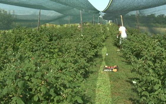Органските производители ќе бидат евидентирани во посебен регистар