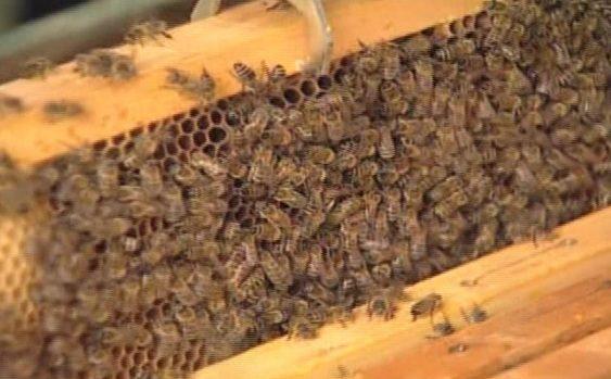 Пчеларството може да биде сериозен бизнис