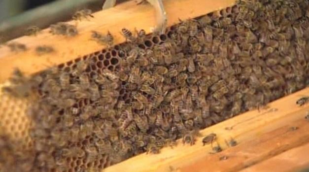 Photo of Пчеларството може да биде сериозен бизнис