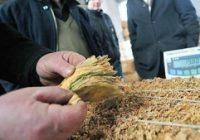 Откупени околу 90 отсто од произведениот тутун во земјава