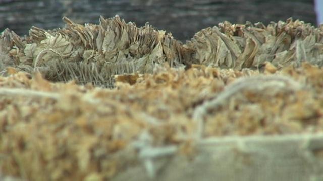 Photo of Привршува откупот на тутунот