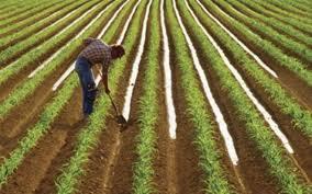 Државата да обезбеди пари за да ги покрива загубите на земјоделците