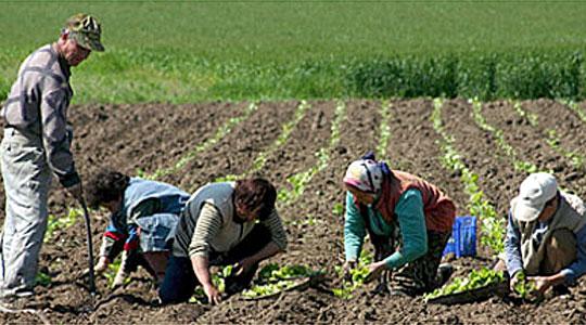 Photo of Рурална коалиција: Земјоделците се незадоволни бидејќи се само формално вклучени во креирањето земјоделски политики