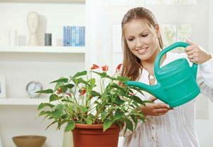 Како да се залеваат растенијата во зима